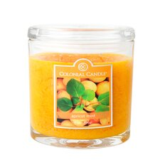 <strong>Colonial Candle</strong> Apricot Mint Jar Candle