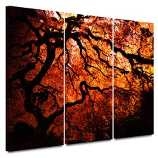 <strong>Art Wall</strong> 3 Piece 'Fire Breather: Japanese Tree' Gallery-Wrapped Canvas Art by John Black