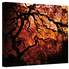 ''Japanese Tree'' by John Black Photographic Print on Canvas