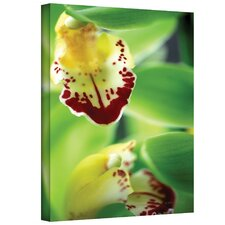 Kathy Yates ''Cymbidium Sea Foam Emerald Orchid'' Canvas Art