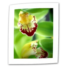 """Cymbidium Sea Foam Emerald Orchid"" by Kathy Yates Photographic Print on Canvas"