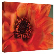 ''Fiery Dahlia'' by Kathy Yates Photographic Print on Canvas