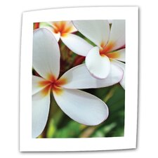 "Kathy Yates ""White Plumeria"" Canvas Wall Art"
