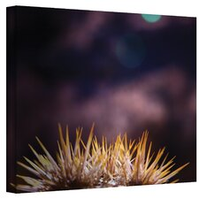 ''Obviousness Has it's Advantages'' by Mark Ross Photographic Print on Canvas