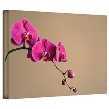 'Magenta Orchid' by Elena Ray Photographic Print on Canvas