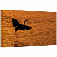 David Liam Kyle 'Smooth Landing in Morning Glow' Gallery-Wrapped Canvas Wall Art