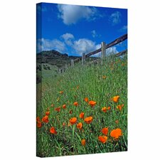 Kathy Yates 'Poppies and the Fence' Gallery-Wrapped Canvas Wall Art