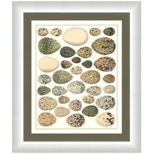 <strong>Melissa Van Hise</strong> Eggs ll Wall Art