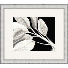 Rheede's I Framed Graphic Art