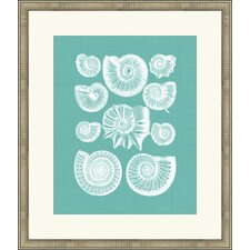 <strong>Melissa Van Hise</strong> Colorful Shells III Wall Art