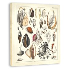 <strong>Melissa Van Hise</strong> Oken Shells I Canvas Wall Art