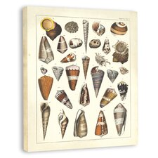 <strong>Melissa Van Hise</strong> Oken Shells II Canvas Wall Art