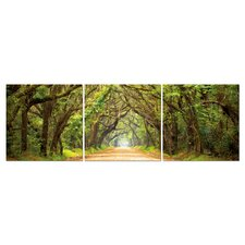 Baxton Studio Tunnel of Trees 3 Piece Photographic Print on Canvas Set