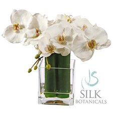 Orchid Phalaenopsis in Square Glass Container