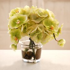 Hydrangea and Phalaenopsis Orchid in Glass Vase