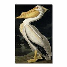 John James Audubon 'American White Pelican' Canvas Art