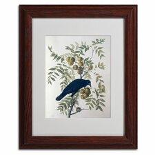 John James Audubon 'American Crow' Matted Framed Art