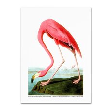 John James Audubon 'American Flamingo' 1834 Canvas Art