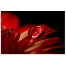 "Red Drop by Philippe Sainte-Laudy, Canvas Art - 22"" x 32"""
