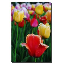 <strong>Trademark Fine Art</strong> In Among the Blooming Tulips by Kurt Shaffer, Canvas Art - 36 x 24""