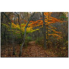 "<strong>Trademark Fine Art</strong> Oak Hill by Kurt Shaffer, Canvas Art - 16"" x 24"""