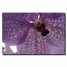 'Orchid Veins' by Kurt Shaffer Photographic Print on Canvas
