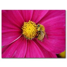 "<strong>Trademark Fine Art</strong> Cosmos Bee by Kurt Shaffer, Canvas Art - 35"" x 47"""