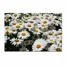 "<strong>Trademark Fine Art</strong> I Love Daisies! by Kurt Shaffer, Canvas Art - 16"" x 24"""