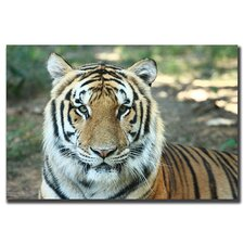 <strong>Trademark Fine Art</strong> Tiger by Cary Hahn Canvas Art