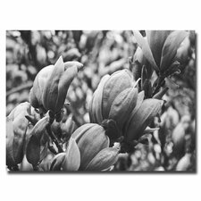 "<strong>Trademark Fine Art</strong> ""Closeup Magnolias"" Canvas Art"