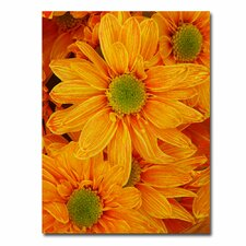 "<strong>Trademark Fine Art</strong> ""Orange Daisies"" Canvas Art"