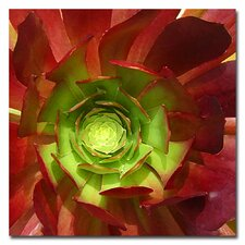 """Succulent Square I"" Canvas Art"