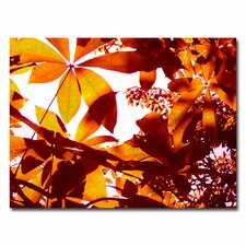 "<strong>Trademark Fine Art</strong> ""Light Coming Through Tree Leaves"" Canvas Art"