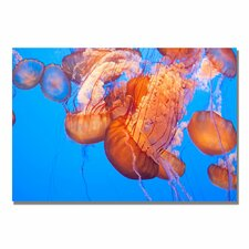 "<strong>Trademark Fine Art</strong> ""Jellyfish Close"" Canvas Art"