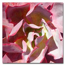 """Succulent Square II"" Canvas Art"