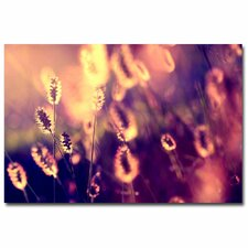 """Let Them Shine"" by Beata Czyzowska Young Photographic Print on Canvas"