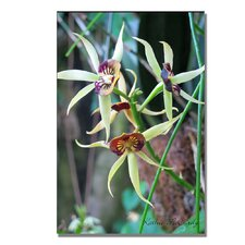 <strong>Trademark Fine Art</strong> 'Orchids' Canvas Art