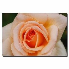 <strong>Trademark Fine Art</strong> 'Early Morning Rose' Canvas Art