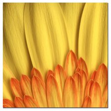 'Flame' by Aiana Photographic Print on Canvas