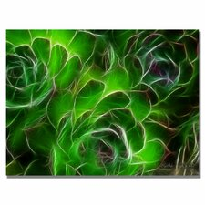 <strong>Trademark Fine Art</strong> 'Hens and Chicks' Canvas Art