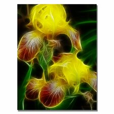 <strong>Trademark Fine Art</strong> 'Yellow Iris' Canvas Art