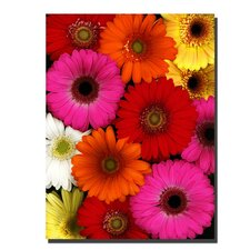 <strong>Trademark Fine Art</strong> 'Flowers' Canvas Art