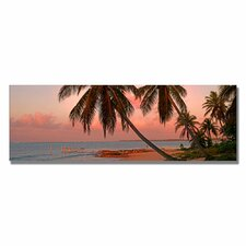 <strong>Trademark Fine Art</strong> 'Cayman Palms II' Canvas Art