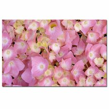 <strong>Trademark Fine Art</strong> 'Pink Hydrangea' Canvas Art
