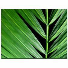 <strong>Trademark Fine Art</strong> 'Palm at Night' Canvas Art