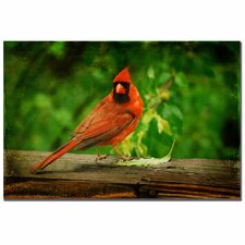<strong>Trademark Fine Art</strong> 'Cardinal in Summer' Canvas Art