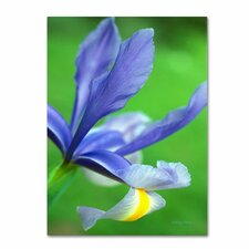 <strong>Trademark Fine Art</strong> 'Spring Iris' Canvas Art