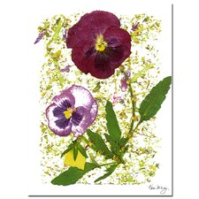 <strong>Trademark Fine Art</strong> 'Plum Pansy' Canvas Art