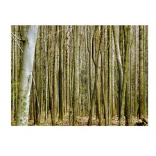 <strong>Trademark Fine Art</strong> 'Forest Floor Spring' Canvas Art