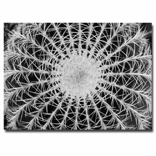 """Barrel Cactus"" by Kurt Shaffer Photographic Print on Canvas"